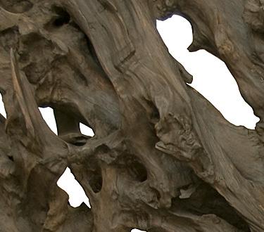 Esencial 2 - La obra de la naturaleza como inspiración. Jermoe Abel Seguin, Lys, Etienne Moyat.